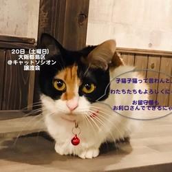 *中猫〜大人猫のネコ譲渡会*