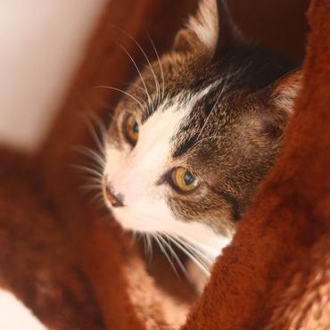 猫風邪の症状も収まり目もパッチリしました(=^・^=)♪