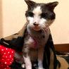 高齢者可!元気なおじいさん猫 サムネイル2