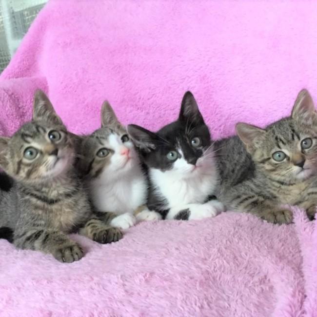 ねこ猫ネコの会のカバー写真
