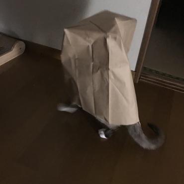 紙袋から出られないみたい