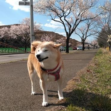 先週〜☃雪も積もったのに(゜o゜)桜❀も(゜゜)