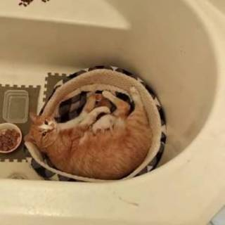 1歳半の猫ちゃん 募集