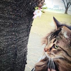「お花見」サムネイル1