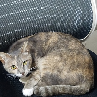 野良猫の里親募集してます。