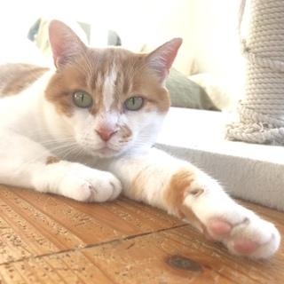 猫には優しい男!ぽっちゃり海王2号くん♂
