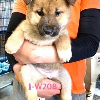 W208 可愛い子犬です。