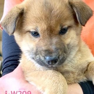 W209 可愛い子犬です。