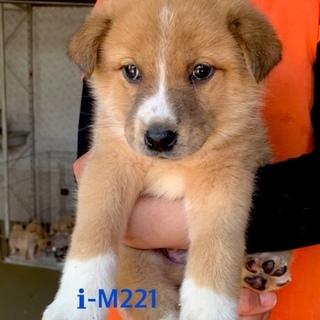 M221 可愛い子犬です。
