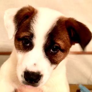 W230 可愛い子犬です。