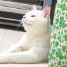 半長毛 保護猫♂ 3歳くらい サムネイル5