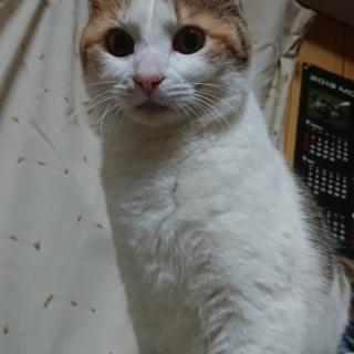 成猫も可愛いよ☆三毛柄女の子