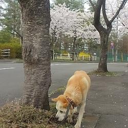「❀❀3回めのお花見❀❀(•ө•)♡」サムネイル3