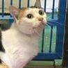 岩国市健康福祉センター 三毛+子猫5匹