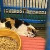 岩国市健康福祉センター 三毛+子猫5匹 サムネイル3