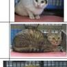 岩国市健康福祉センター 三毛+子猫5匹 サムネイル6