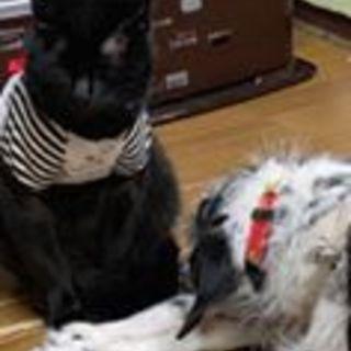 犬と仲良くできる来る猫1歳