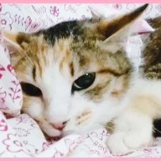 """""""4/21""""シェルター譲渡会参加:ぽぷり"""