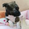 大人しい1ヶ月の小犬ちゃん︎☺︎ サムネイル2
