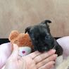 大人しい1ヶ月の小犬ちゃん︎☺︎ サムネイル3