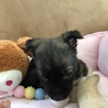 大人しい1ヶ月の小犬ちゃん︎☺︎ サムネイル5