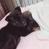 大人しい1ヶ月の小犬ちゃん︎☺︎ サムネイル7