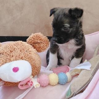 大人しい1ヶ月の小犬ちゃん︎☺︎