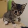 500gの元気な美猫4姉妹ペアで サムネイル2