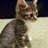 500gの元気な美猫4姉妹ペアで サムネイル3