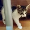 500gの元気な美猫4姉妹ペアで サムネイル5
