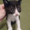 500gの元気な美猫4姉妹ペアで サムネイル6