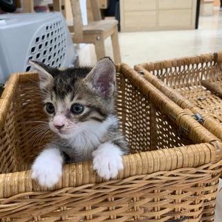 とても可愛いキジ猫ちゃんです①