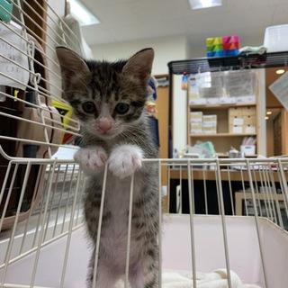 可愛いキジ猫ちゃんです②