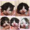 トライアル予定☆保健所レスキューの子猫達 サムネイル2