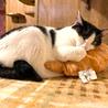 毛玉大好き!ギザギザしっぽの白黒猫エバちゃん サムネイル2