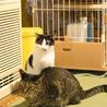 毛玉大好き!ギザギザしっぽの白黒猫エバちゃん サムネイル3