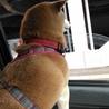 私はこうして風を感じてドライブ♪銀太くんヒロくんも…楽しくドライブ出来るようになるといいなぁ〜♡真冬でも窓を開けて〜おかあさんサブ〜〜