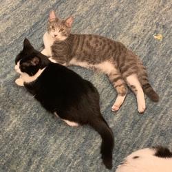 ⭐️ネコと一緒に暮らすのは楽しい〜⭐️ ネコカフェ体験もできる!ネコ好きによる、ネコのための里親会
