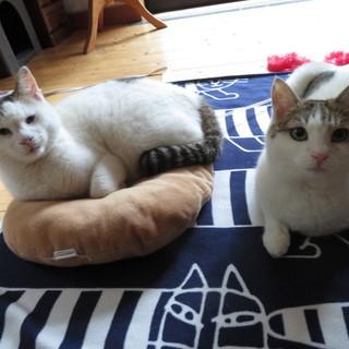 きょうだい猫2〜4才 鎌倉「猫見亭」