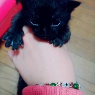 将来有望黒猫★ケン★きっとイケメンになる!