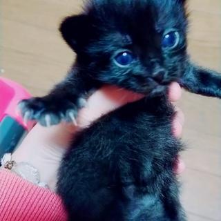 将来有望★みなこ★黒猫女子