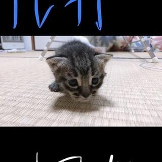子猫 生後1ヶ月未満