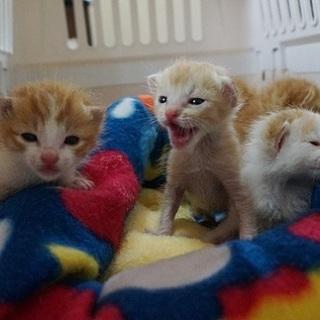 【募集停止】4匹のミルクっ子です。経験者募集!
