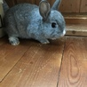 子ウサギの里親募集中です!!