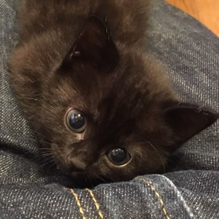 譲渡会参加子猫の紹介