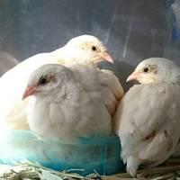 白羽、白水、深白