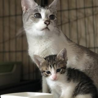3/19生まれ青い瞳の子猫とママ3匹一緒に