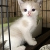3/19生まれ青い瞳の子猫とママ3匹一緒に サムネイル5