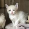 3/19生まれ青い瞳の子猫とママ3匹一緒に サムネイル6