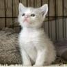 3/19生まれ青い瞳の子猫とママ3匹一緒に サムネイル7